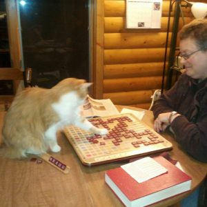 cat playing scrabble
