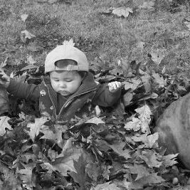 baby and dogs in leaves