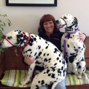 2 dalmations with Kindred Spirits client