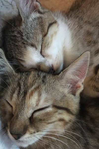 2 sleeping kittens