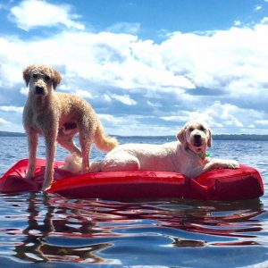 2 dogs on a red raft