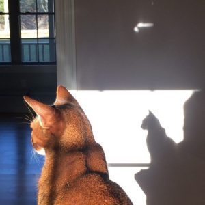 cat & shadow