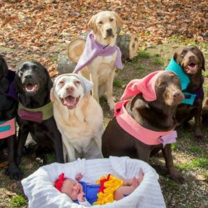 Snow WHIte and the Seven Dwarf pups!