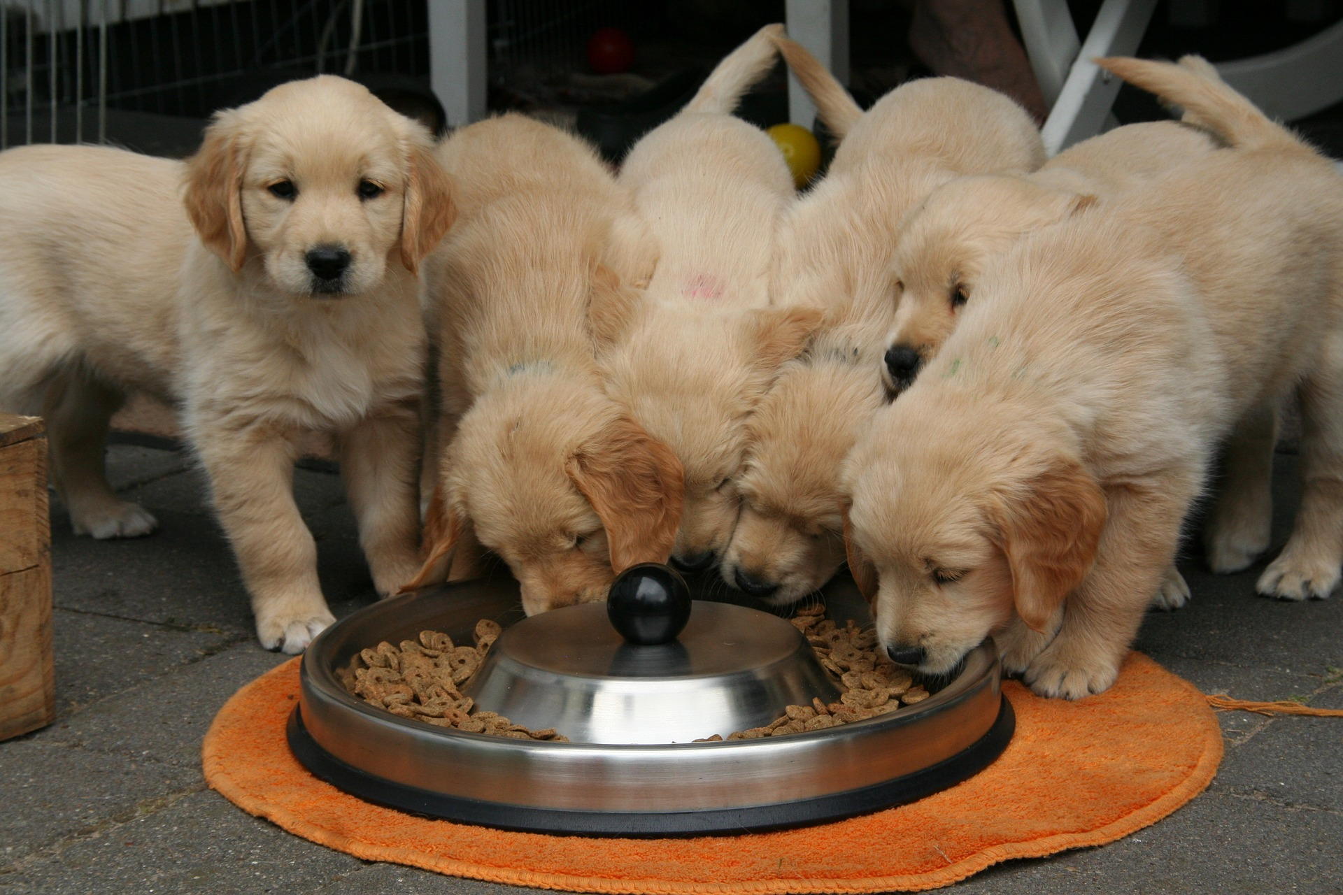 Puppy Nutrition - Kindred Spirits